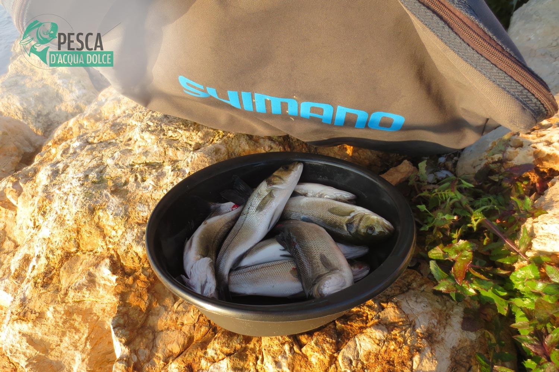 Spigole pescate nel fiume Ebro